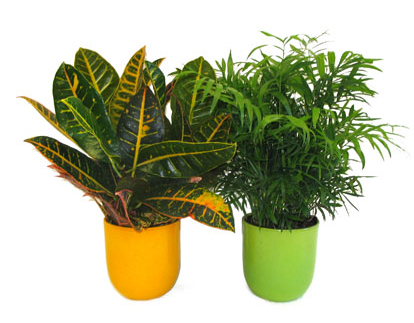potted plants  avon valley floral potted plants  falmouth, nova, Natural flower