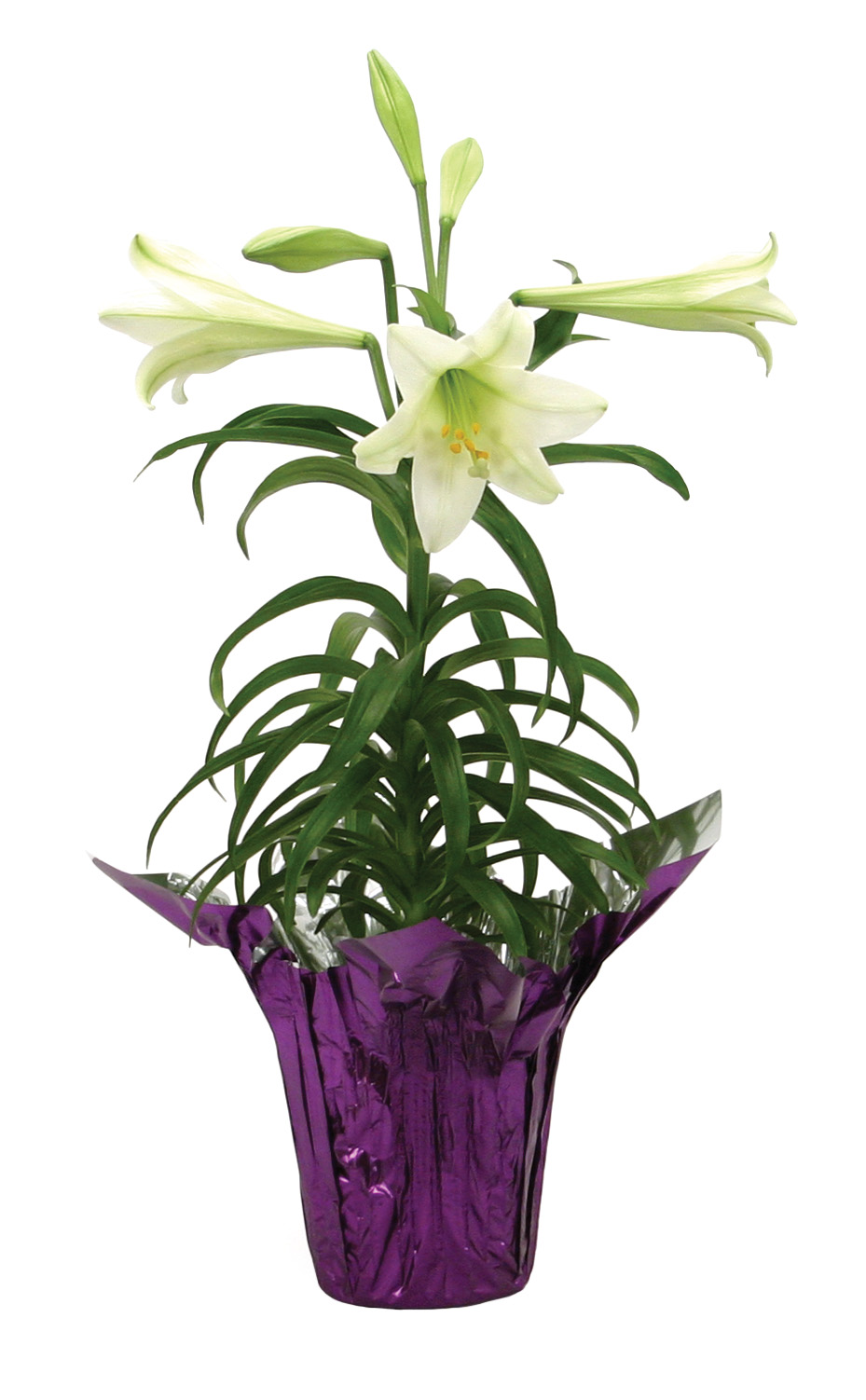 easter lilies free clipart - photo #27